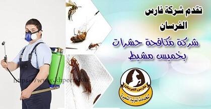 شركة مكافحة حشرات بخميس مشيط مبيدات امنه علي الصحه