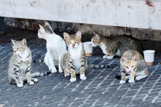مكافحة القطط بالخبر